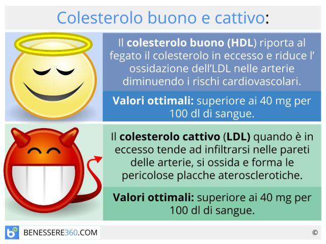 Colesterolo buono e cattivo: differenza e rapporto tra hdl ed ldl