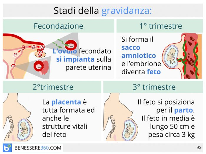 Calendario Della Gravidanza Calcolo.Fasi Della Gravidanza Calcolo E Calendario Settimana Per