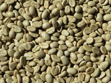 diabete di estratto di chicco di caffè verde effetti collaterali