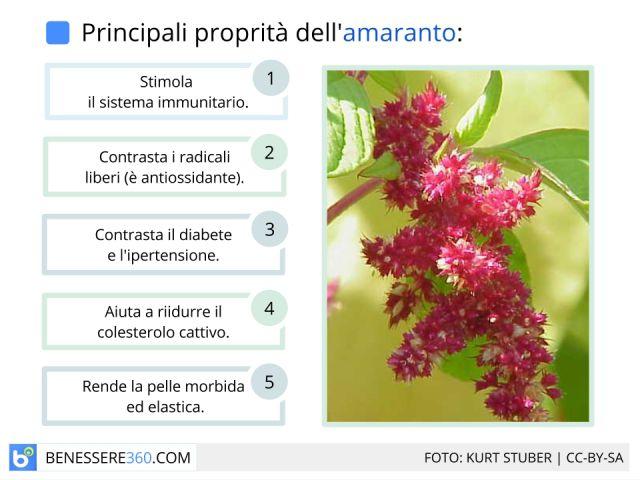 Amaranto:  proprietà, calorie e valori nutrizionali dei semi e dell'olio