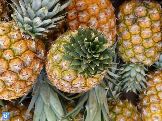 Ananas: proprietà, calorie e valori nutrizionali del frutto brucia grassi