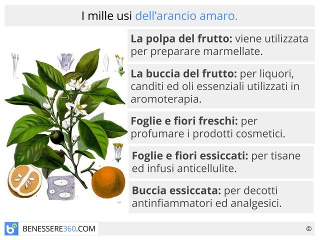 Arancio amaro: fa dimagrire? Proprietà, benefici e controindicazioni del frutto e dell'olio essenziale di melangolo
