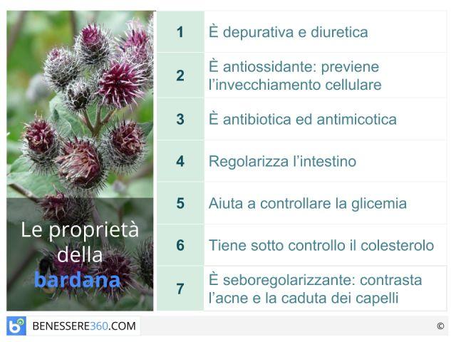 Bardana: proprietà curative e controindicazioni di radice e foglie
