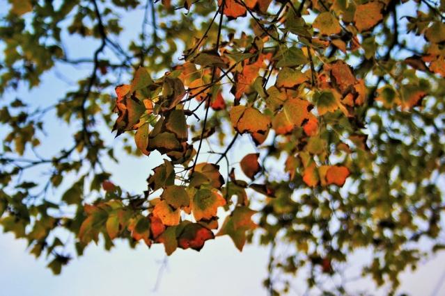 Cambio di stagione: sintomi, disturbi e rimedi naturali