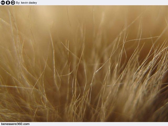 Capelli secchi: cause, rimedi naturali, prodotti e maschere