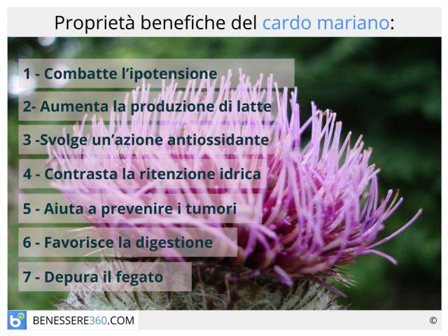 Cardo mariano: proprietà, controindicazioni e posologia del silybum marianum
