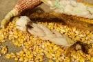 Cereali senza glutine: quali sono? Elenco, calorie e benefici dei cereali per celiaci