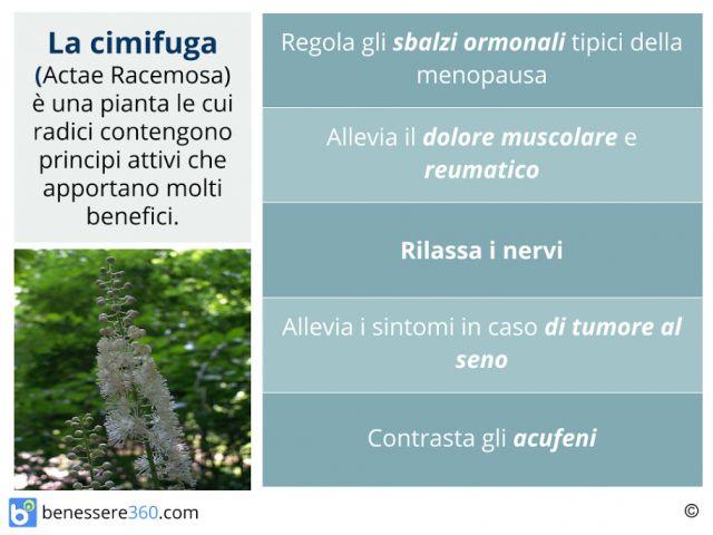 Cimicifuga. Proprietà, usi, controindicazioni ed effetti collaterali della Actaea racemosa