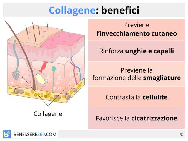 Collagene: usi e benefici dei vari tipi (marino, idrolizzato, puro, vegetale…)