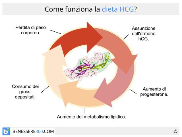 Dieta hcg: come funziona, cosa mangiare (menù), effetti collaterali