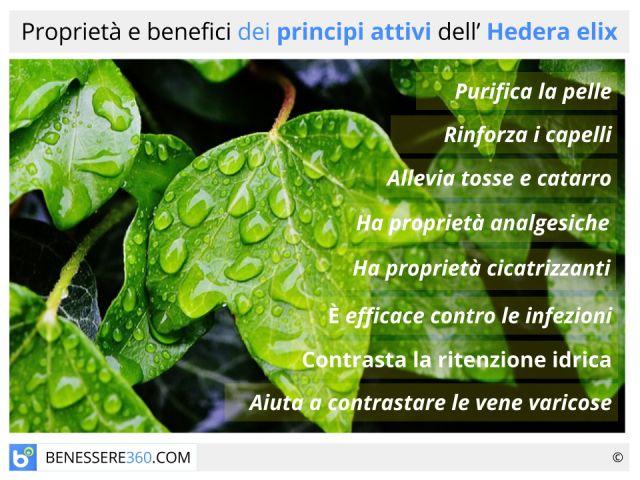 Edera: proprietà e controindicazioni dell'Hedera helix
