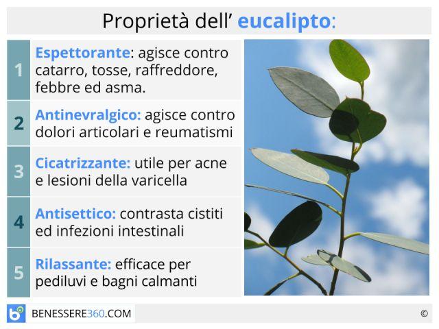 Eucalipto: proprietà terapeutiche e cosmetiche delle foglie della pianta