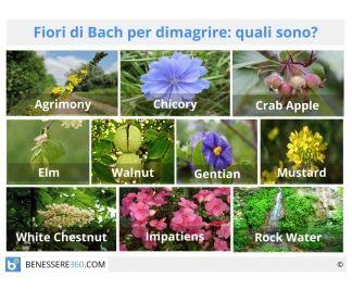 Fiori di Bach per dimagrire