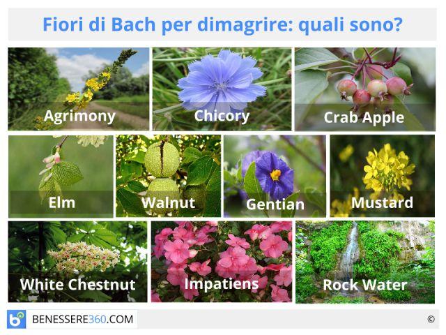 Fiori di Bach per dimagrire: quali sono? Funzionano contro fame nervosa e per perdere peso?