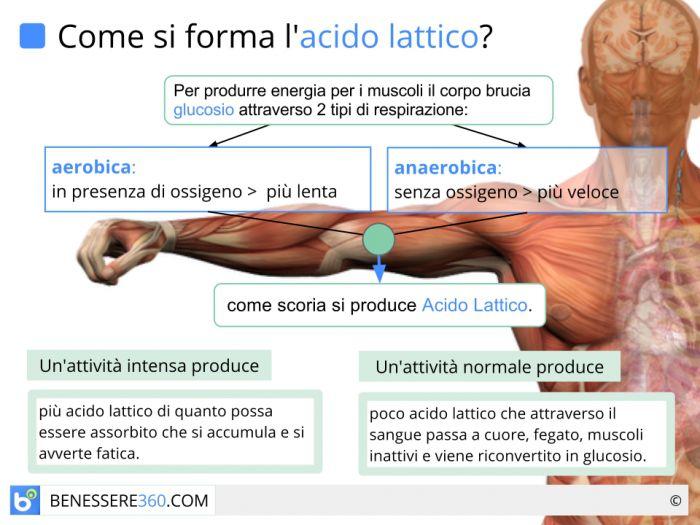 Formazione dell'acido lattico nei muscoli
