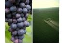 Frutta e pesticidi: come eliminarli? Effetti e rischi