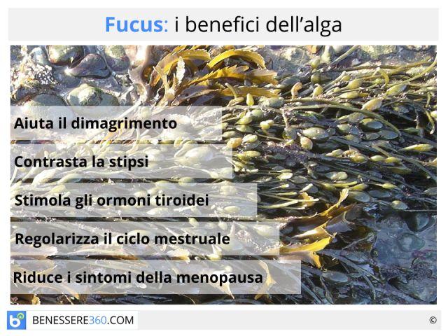 Fucus: fa dimagrire? Proprietà e controindicazioni dell'alga