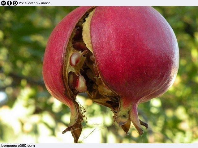 Melograno: proprietà, calorie, valori nutrizionali e benefici del frutto