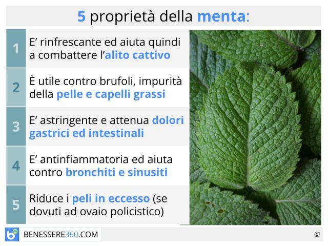 Menta: proprietà, tipi, usi, benefici e controindicazioni della pianta