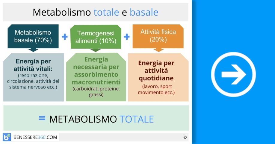 Metabolismo basale e metabolismo totale