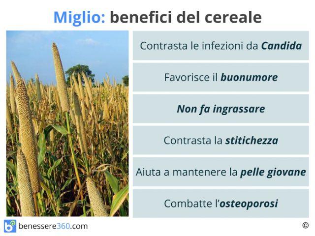 Miglio: proprieta, benefici, valori nutrizionali e calorie del cereale