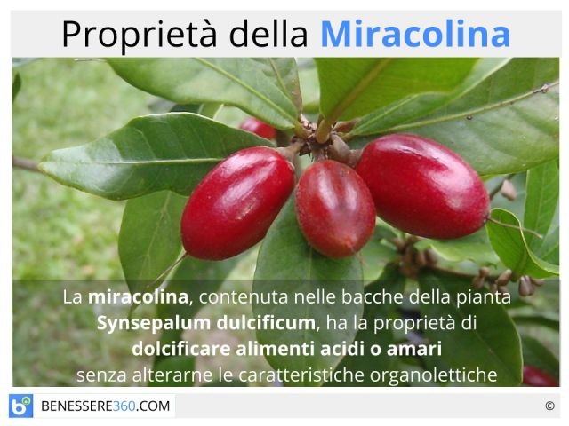 Miracolina: cos'è? Proprietà ed effetti collaterali della bacca