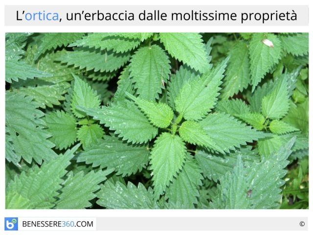 Ortica: proprietà curative e cosmetiche, benefici e controindicazioni