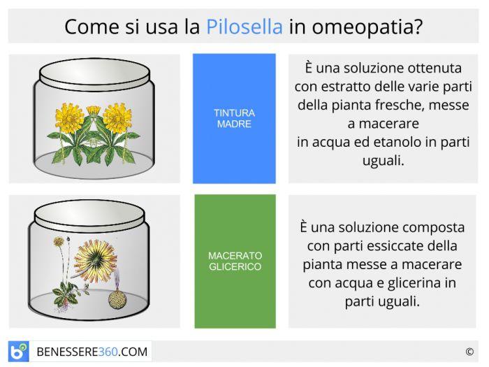 Pilosella in omeopatia:tintura madre o macerato glicerico