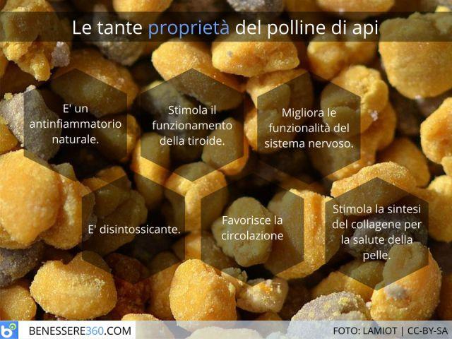 Polline d'api: proprietà, assunzione, dosi e controindicazioni
