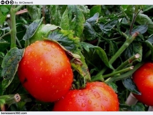 Pomodoro: proprietà, calorie, valori nutrizionali, benefici ed effetti collaterali