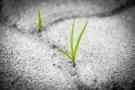 Resilienza: cos'è? Caratteristiche e test per la resistenza psicologica