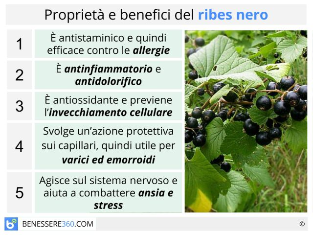 Ribes nigrum: proprietà, posologia, controindicazioni