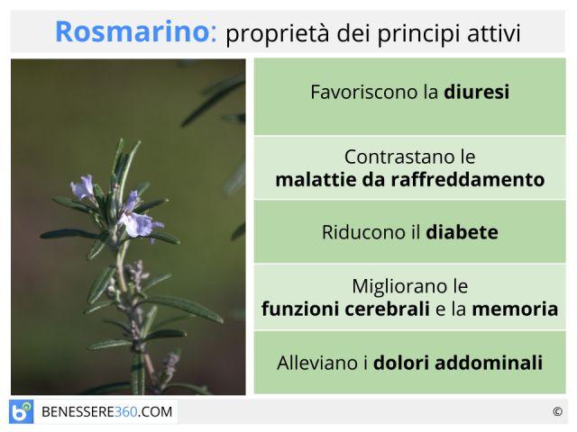 Rosmarino: proprietà, usi, benefici e controindicazioni