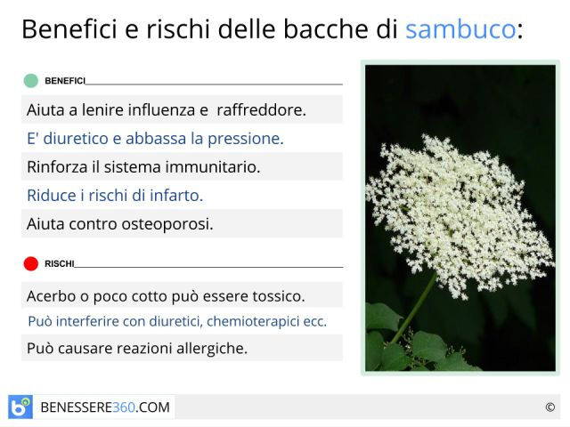 Sambuco: proprietà, benefici, controindicazioni e ricetta dello sciroppo