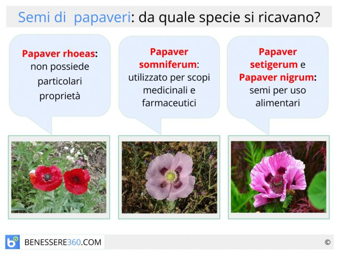 Specie di papaveri