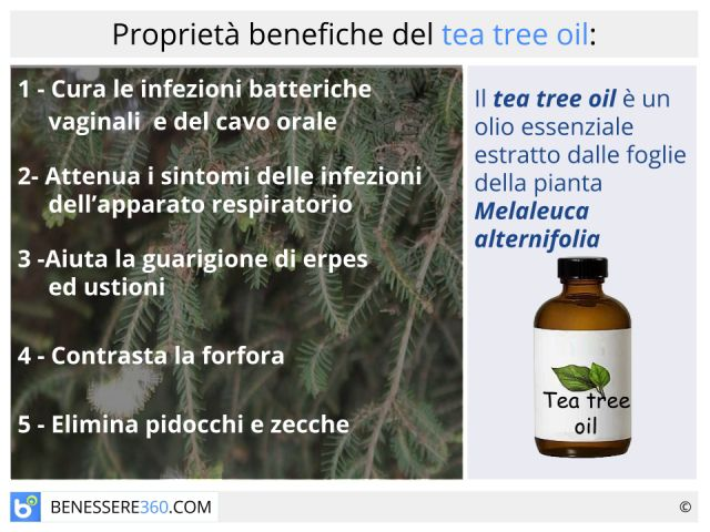 Tea tree oil: proprietà terapeutiche ed estetiche dell' olio di Melaleuca alternifolia