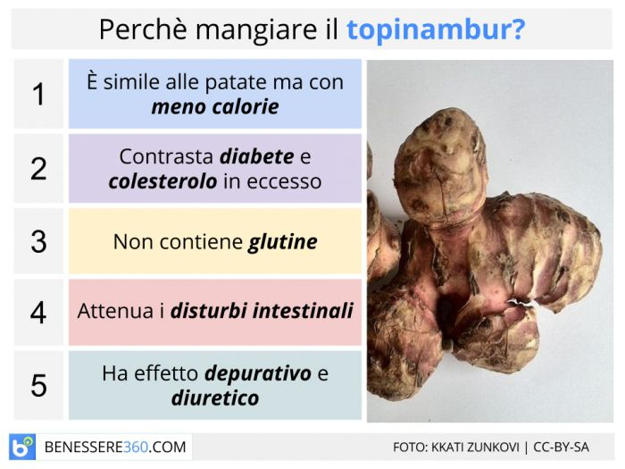 Topinambur propriet nutrizionali curative e calorie for Topinambur pianta